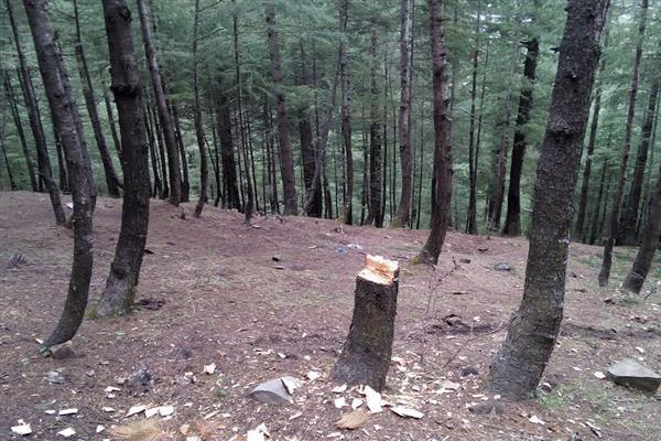 Timber smugglers beat forest official