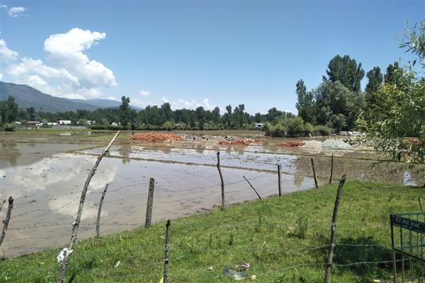 Agriculture land conversion goes on unabated in north Kashmir
