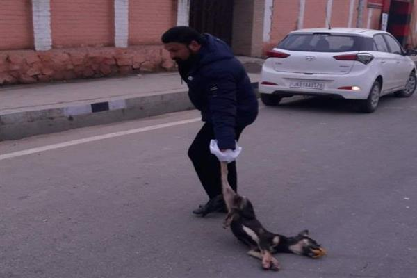 Dy Mayor hails SMC's CSO for personally lifting a dead dog at Peerbagh Srinagar