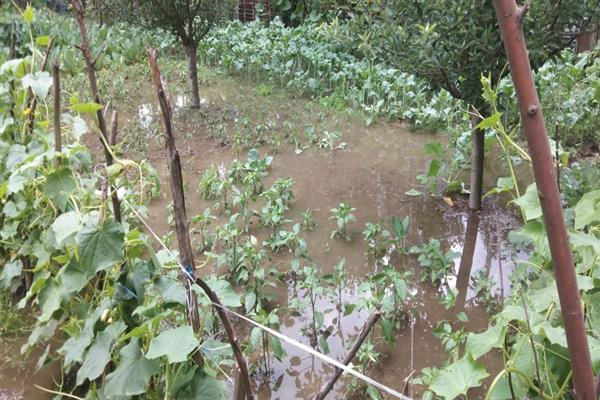 Hailstorm, heavy rains damage crops, vegetables in Bandipora, farmers seek compensation