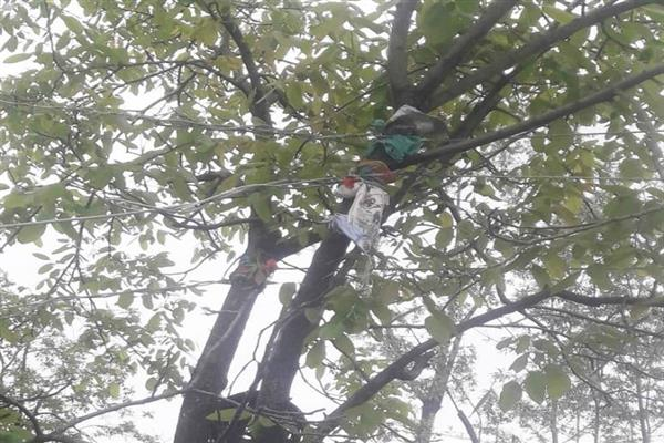 Electric wires hanging on trees in Handwara Village: Residents
